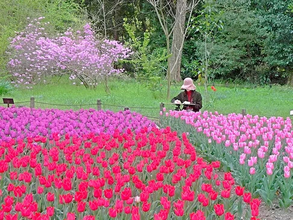 Hoa anh đào và hoa nở rộ tại Vườn bách thảo Kyoto