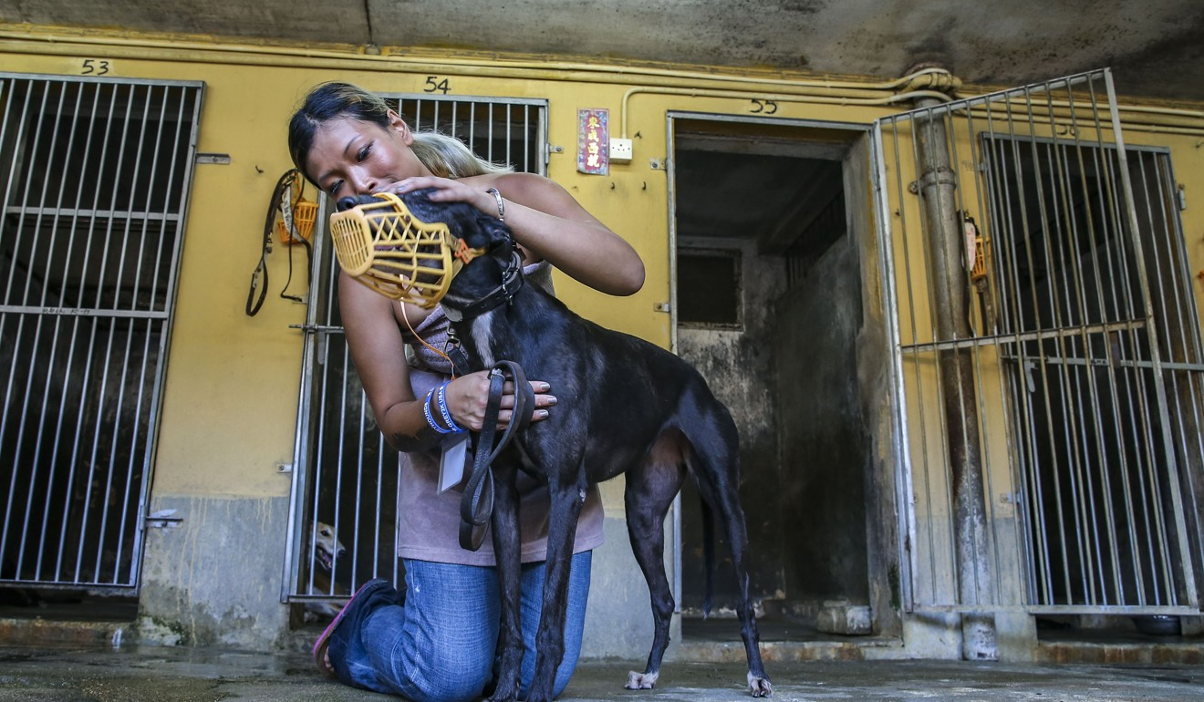Zoe Tang Wing-yan of animal rights group Anima Macau with a greyhound dog from the now-defunct Macau Canidrome. Photo: Dickson Lee