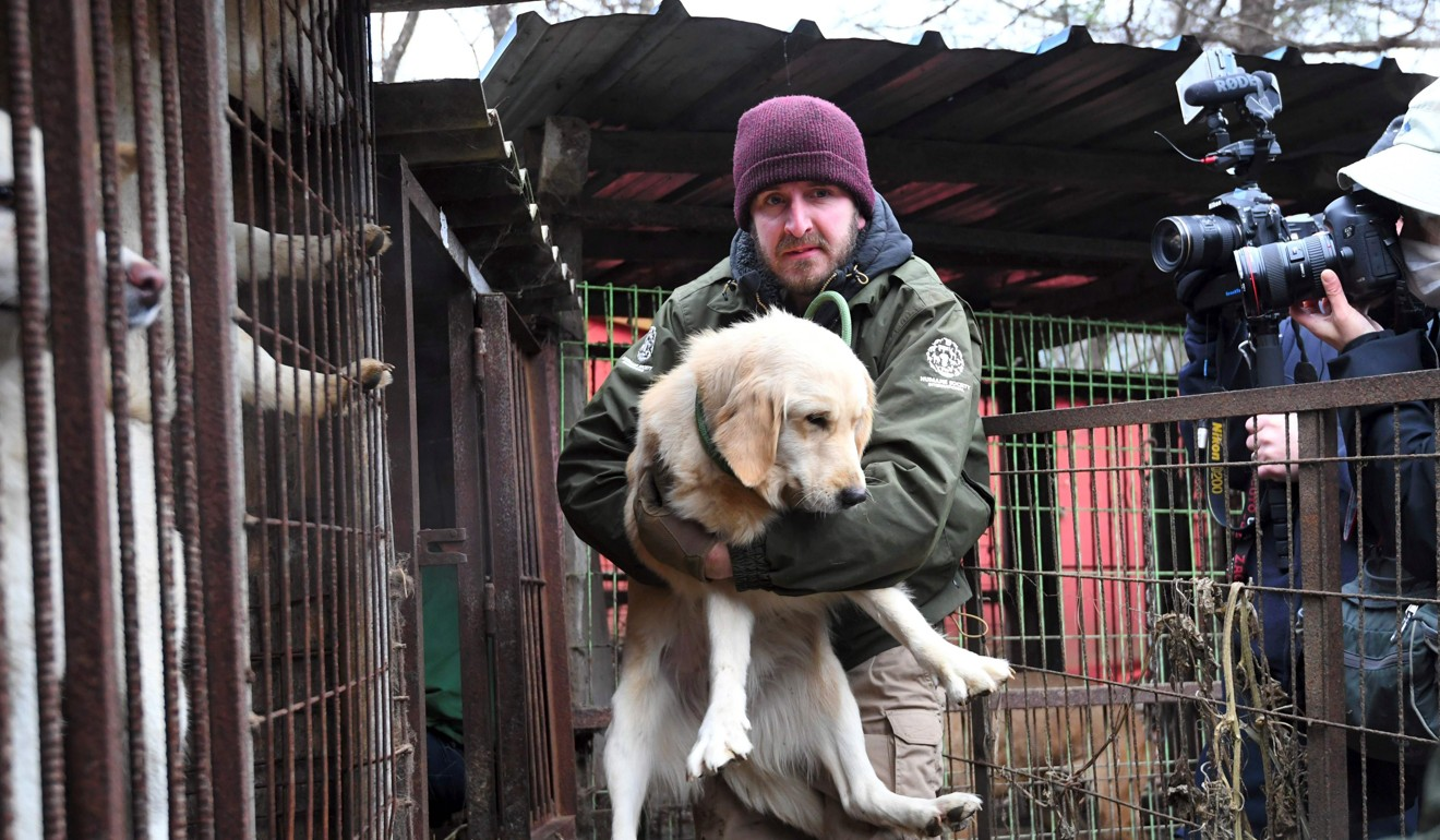 Jack Mcdanger of the Humane Society International (HSI) carries a dog at a dog farm during a rescue event in November 2017, involving the closure of the farm organised by the HSI in Namyangju on the outskirts of Seoul. Photo: AFP