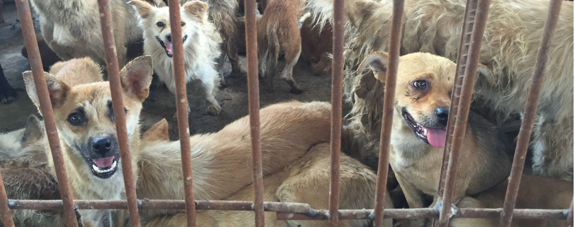 Dogs at a slaughterhouse in Yulin.