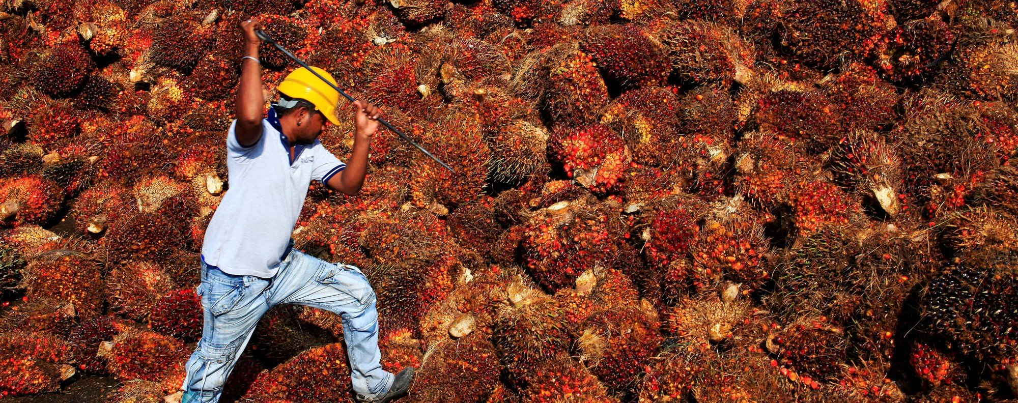 A palm oil factory in Malaysia. Photo: Reuters