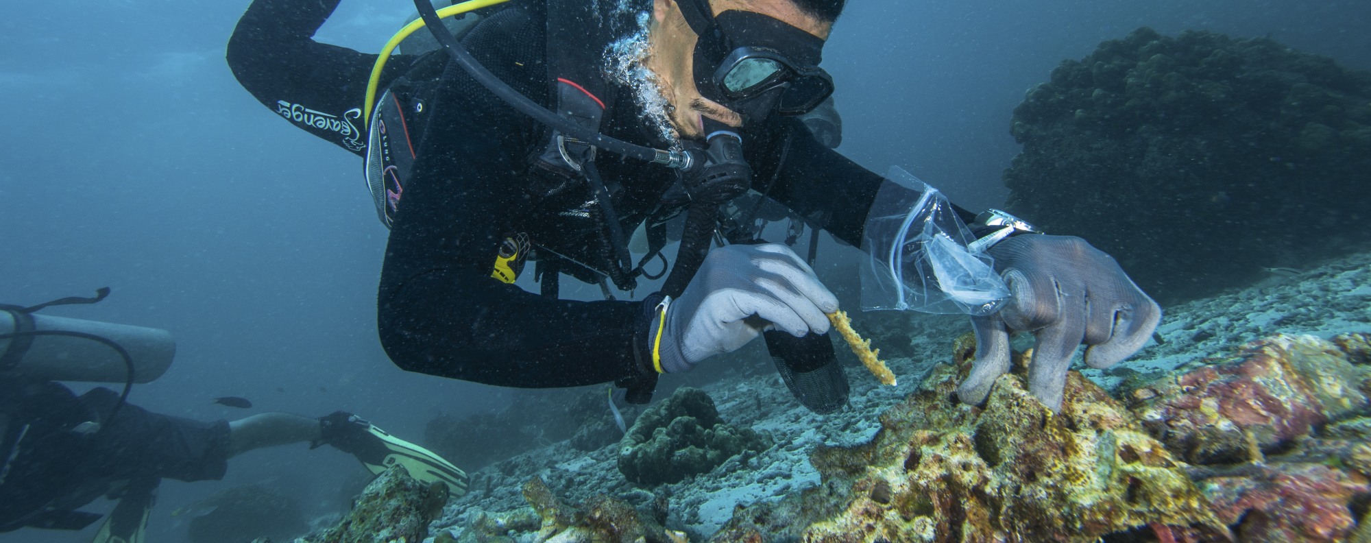 A diver attaches coral fragments to a rock in Thailand. Picture: Magnus Larsson / Scubafish