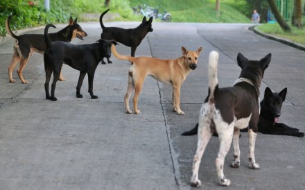 Watch Straw Dogs 2011 Full Movie Online Freegolkesgolkes