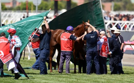 Screens go up around Hong Kong favourite Red Cadeaux as it fails to finish the Melbourne Cup at Flemington Racecourse. Photo: EPA