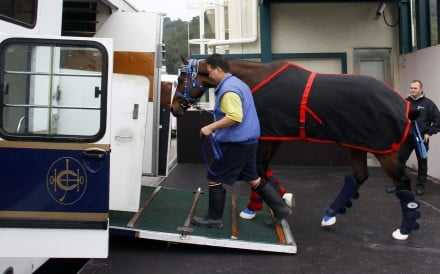 Gun Pit departed Hong Kong for Dubai on Thursday morning, with Caspar Fownes' galloper hoping for a berth in the world's richest race, the Dubai World Cup. Photo: Hong Kong Jockey Club