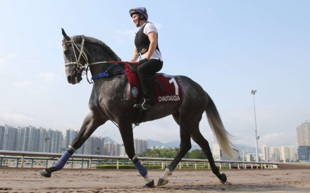 Chautauqua trots on the Sha Tin all-weather track as he prepares for Sunday's Chairman's Sprint Prize. Is he the world's best sprinter? Photo: Kenneth Chan