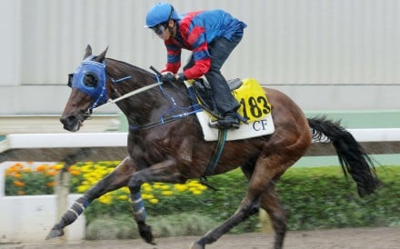 Gun Pit ridden by Vincent Ho Chak-yiu trial in batch one over 1200 metres at Sha Tin. Photos Kenneth Chan