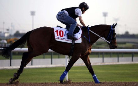 Hong Kong could have its second runner ever at the rich November meeting with the trainer looking to aim his specialist at the US$1 million Dirt Mile