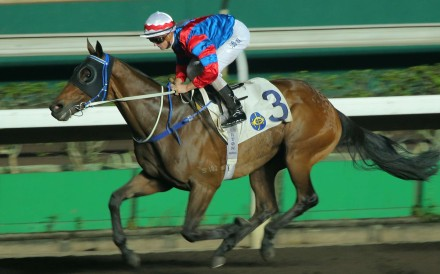 A barrier trial will determine if Gun Pit makes his way to the USA for the Breeders' Cup meeting. Photos: Kenneth Chan
