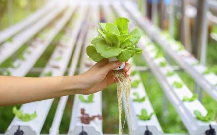 Japanese experts make a breakthrough in farming technology, using polymer film to grow food