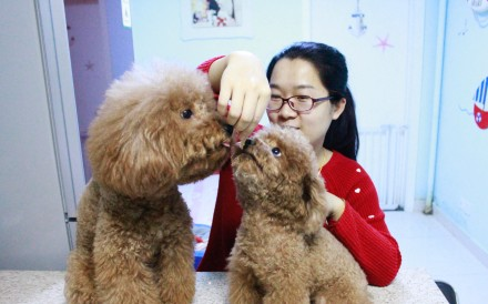 Beijing kindergarten teacher Xu Yingying enjoys taking care of guest dogs as well as her own teddy bear dog. Photo: SCMP Pictures