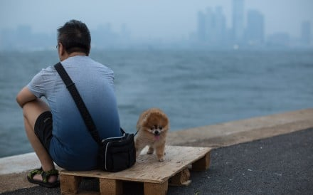 A man and his dog on a pier facing the Victoria Harbour. Everything around Hong Kong seems primed to facilitate a single lifestyle. Photo: EPA