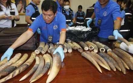 Thai customs officials display seized ivory, being smuggled from Congo to Laos. Photo: AP