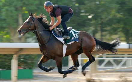 Hong Kong Vase contestant Tiberian gallops on the all-weather track at Sha Tin. Photos: Kenneth Chan