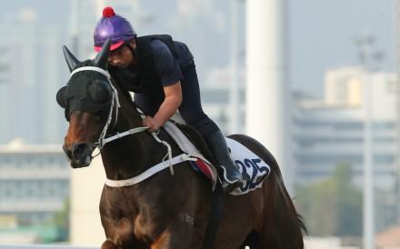 Pakistan Star gallops on Thursday morning. Photos: Kenneth Chan
