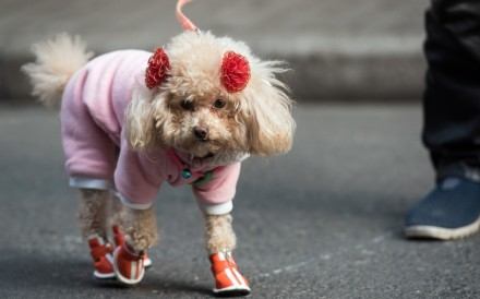 Some pet walkers in Hong Kong have a lot to learn about keeping the environment clean. Photo: AFP