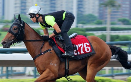 Fortune Anthem gallops at trackwork on Monday morning. Photo: Kenneth Chan