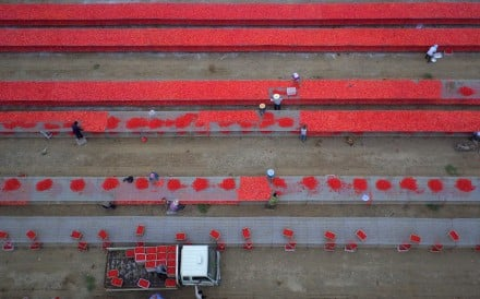 Tomatoes drying at a facility of the Xinjiang Production and Construction Corps. A company controlled by the Corps has defaulted of a bond. Photo: Xinjiang