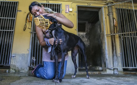 Zoe Tang Wing-yan, a board member of animal rights group Anima Macau, with one of the greyhounds at the now defunct Macau Canidrome. Photo: Dickson Lee