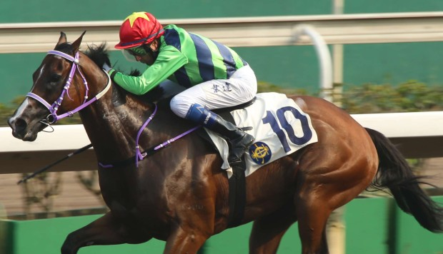 Chris So's Team Fortune on track for another dirt win at Sha Tin