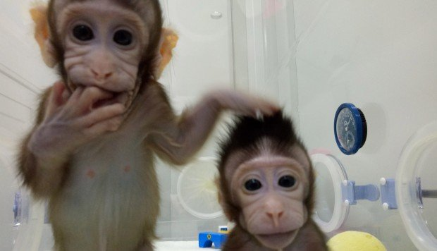 Chinese scientists clone monkeys. Will humans be next?