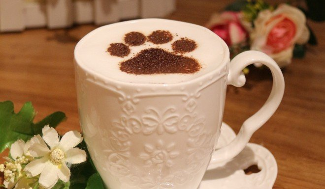 Xi Shuting's cafes offer a range of cat-themed snacks and refreshments