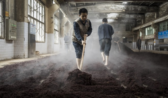 Workers spread out steamed sorghum at a distillery in southwestern China.