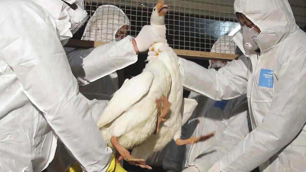 bird flu crisis in hong kong