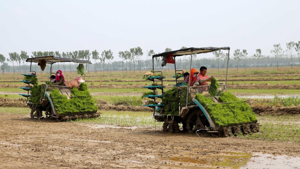 Agriculture Essays and Research Papers | examples.essaytoday.biz