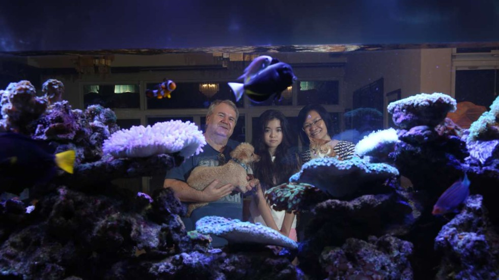 the nemo effect hong kong fish fanciers splash out on saltwater