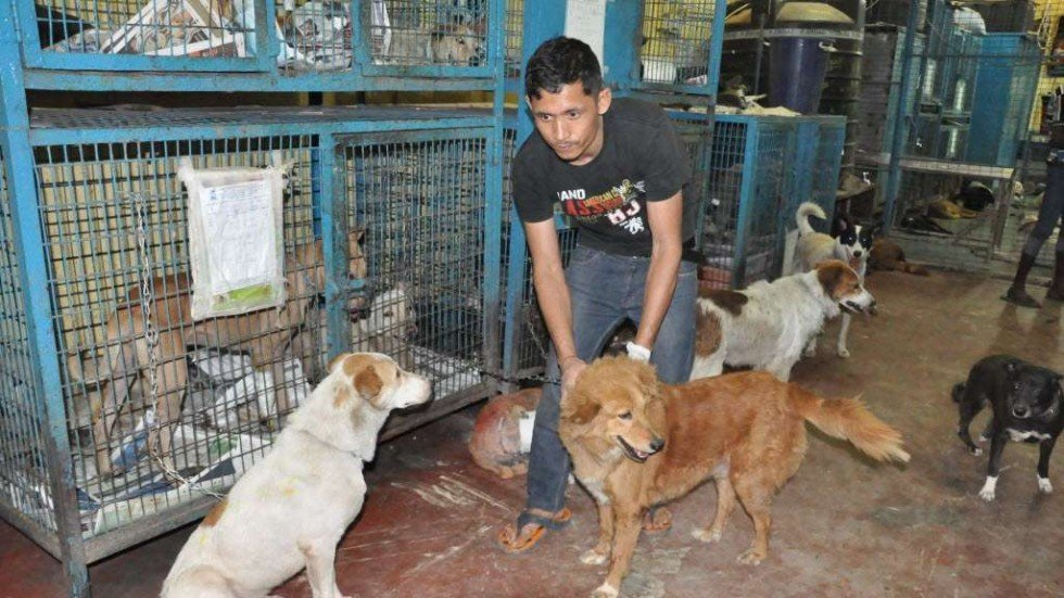 essay on animal rights in india Backgrounder on animal laws in india: battles for laws to protect tribal rights or gay rights what to do when you see an animal being treated cruelly.
