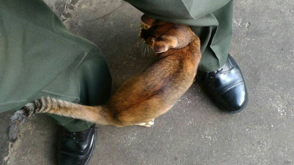 in u turn hong kong prison allows stray cats to stay south china