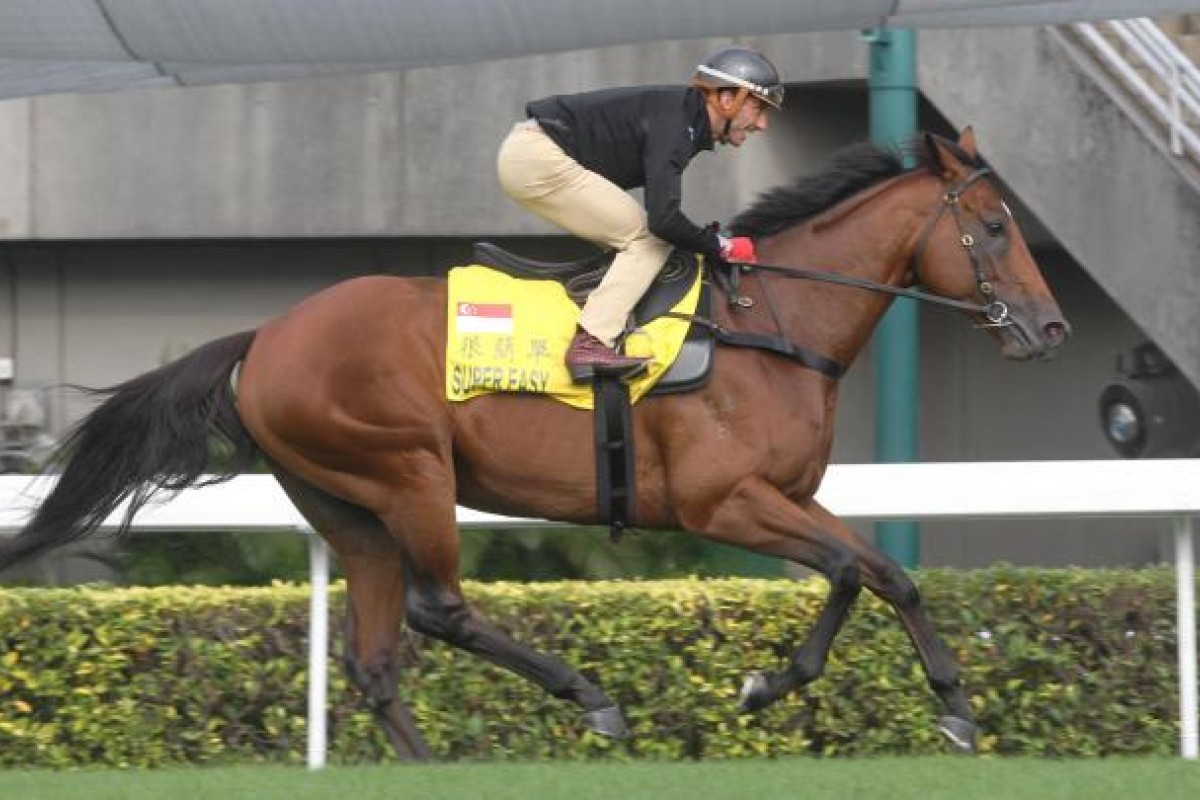 Super Easy gets a good look at Sha Tin. Photo: Kenneth Chan