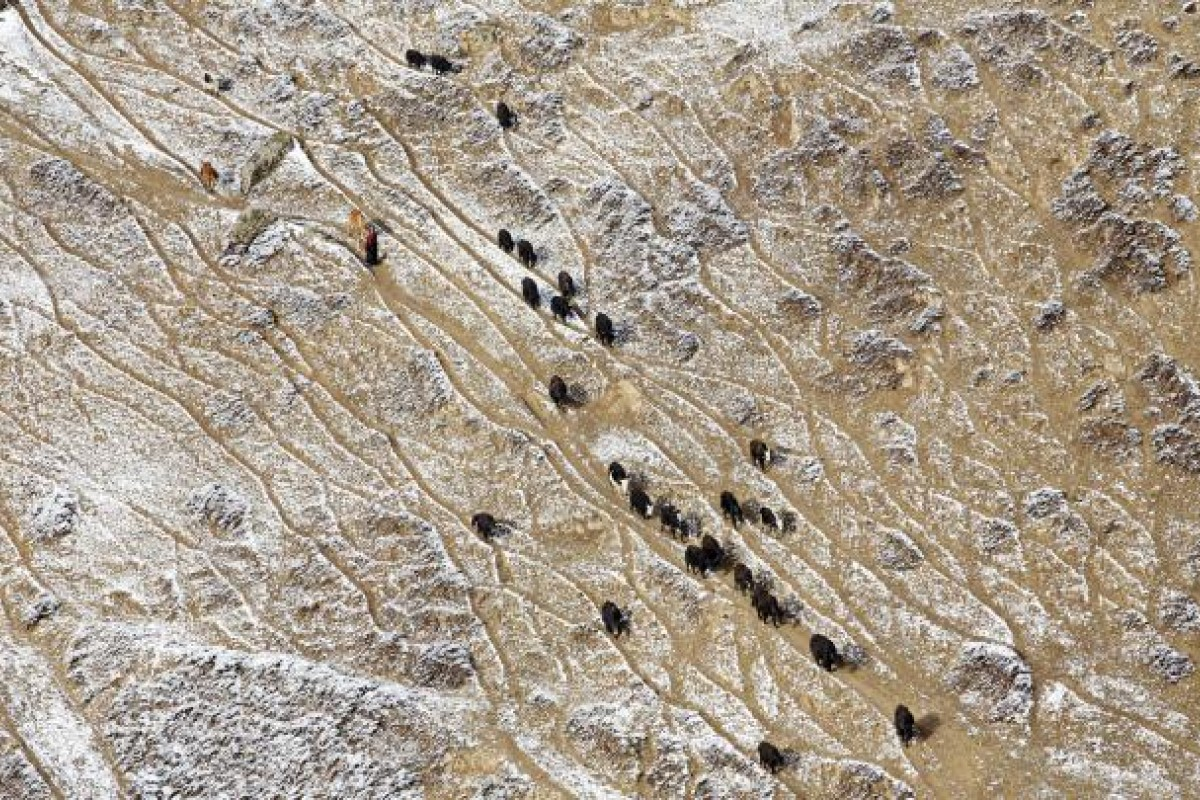 Nomads lead their herds across hills in Sichuan province. Officials have blamed land erosion on overgrazing. However, ungrazed lands continue to deteriorate, suggesting climate change is responsible.