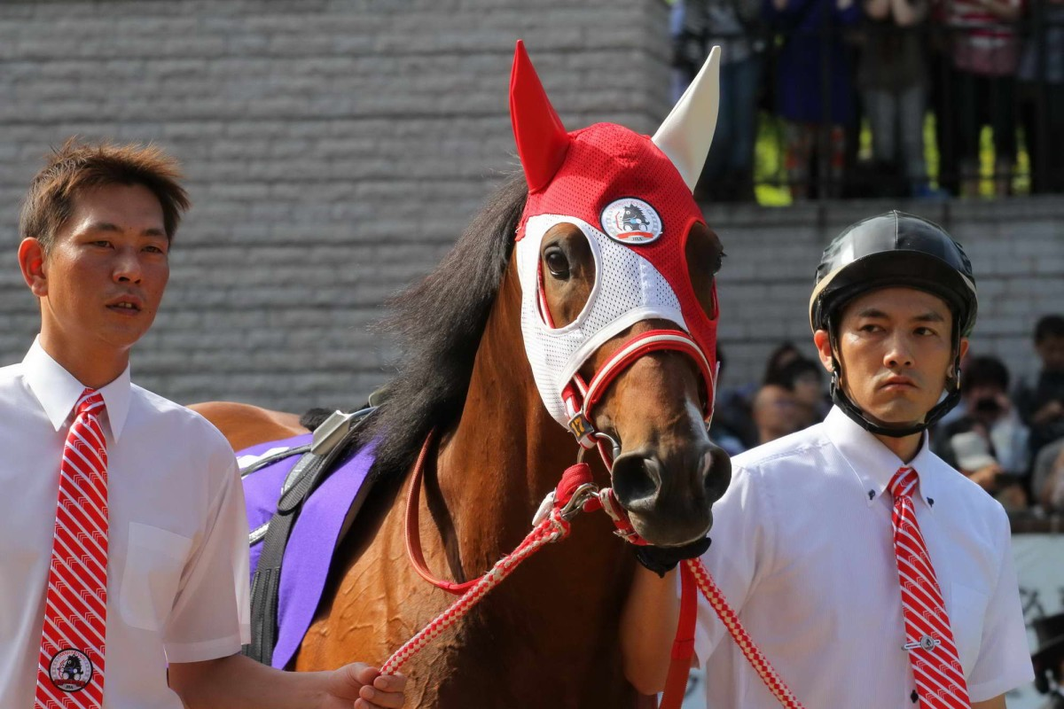 Brightly coloured hoods are a feature of Japanese racing.