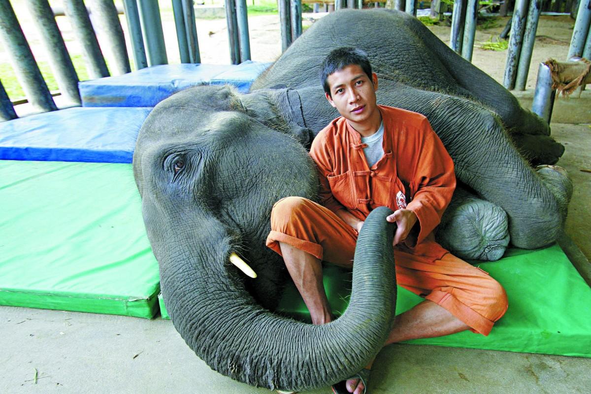 Mosha and her keeper, Palahdee Sujaritsuchada, at the FAE hospital in Lampang, northern Thailand.