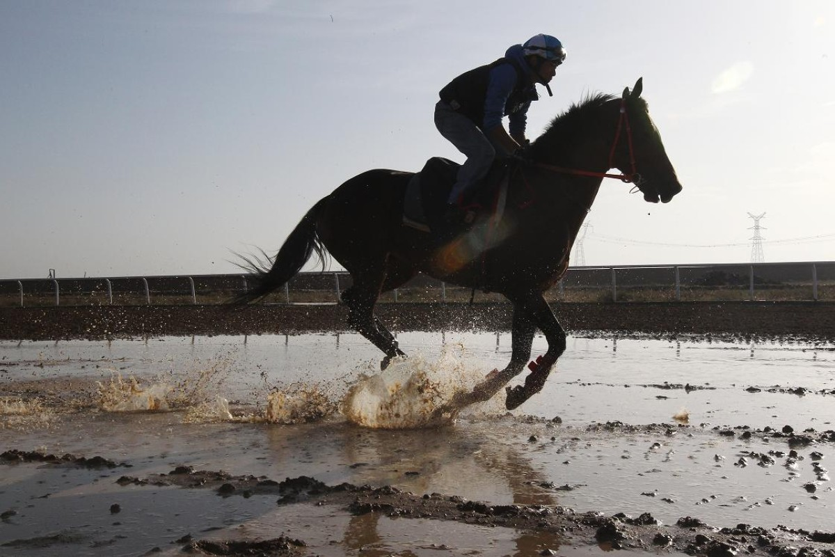A jockey and his horse race over puddles of water on the track.