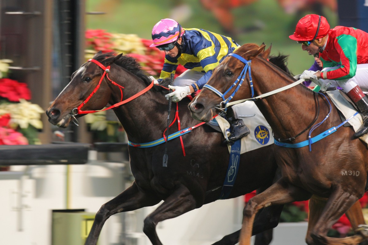 Real Specialist was one who impressed on the 'undercard' on international day last year. Photo: Kenneth Chan
