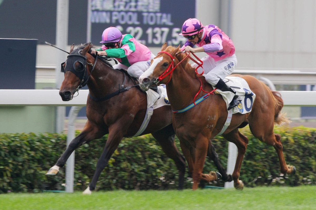 Aerovelocity and Silly Buddies fight out Sunday's opener at Sha Tin. Photo: Kenneth Chan