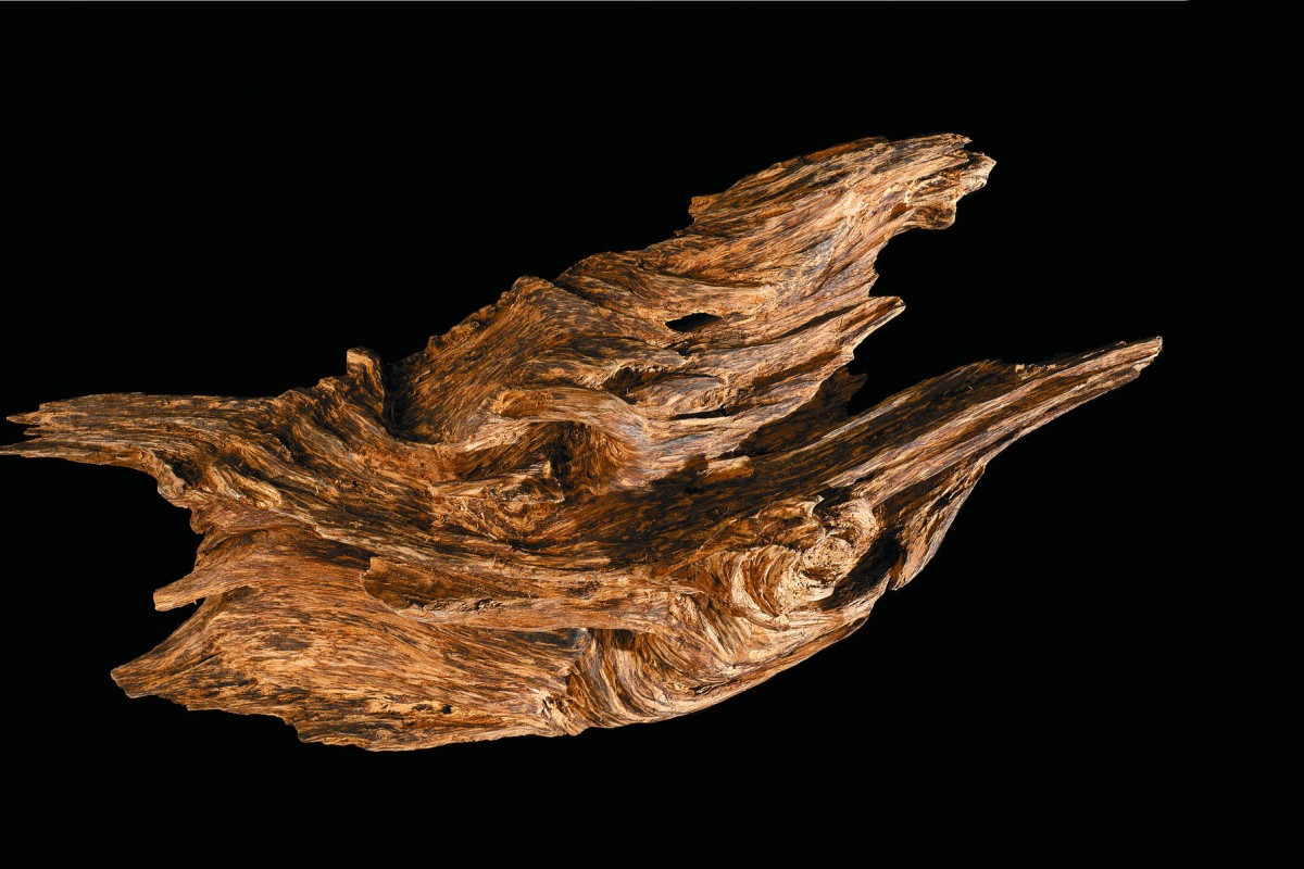 """An 18cm by 41cm piece of agarwood called """"Auspicious Dragon"""", from Indonesia, on display at Paul Kan's Imperial Museum. Photos: Antony Dickson; Nico Zurcher"""
