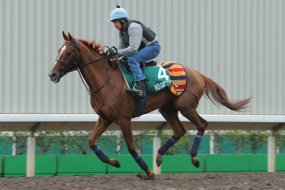 """Red Cadeaux works on the track deemed """"unusable"""" by his connections last Thursday. Photo: Kenneth Chan"""