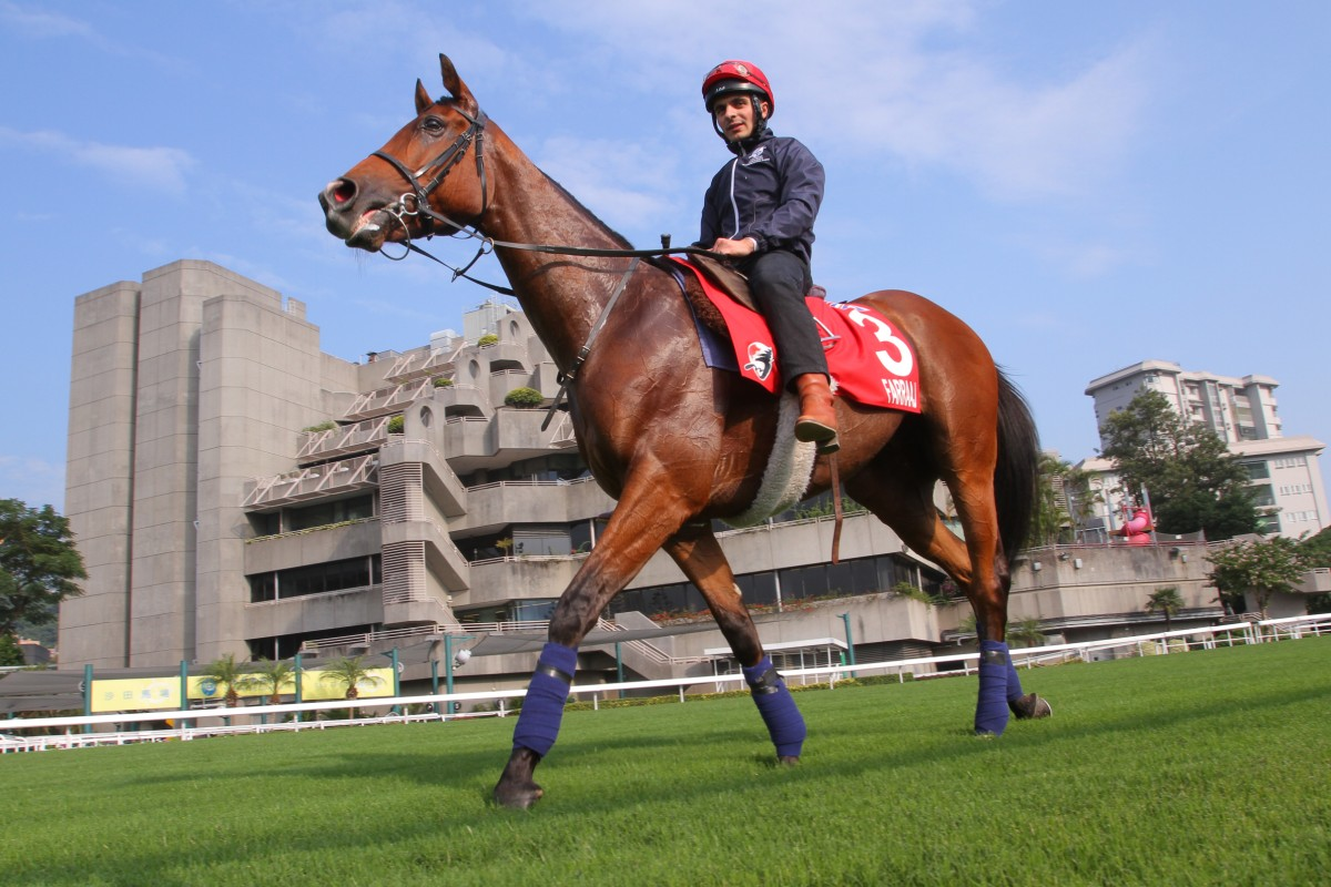 Farraaj is out to join the ranks of globetrotting marvels in the Hong Kong Cup. Photo: Kenneth Chan