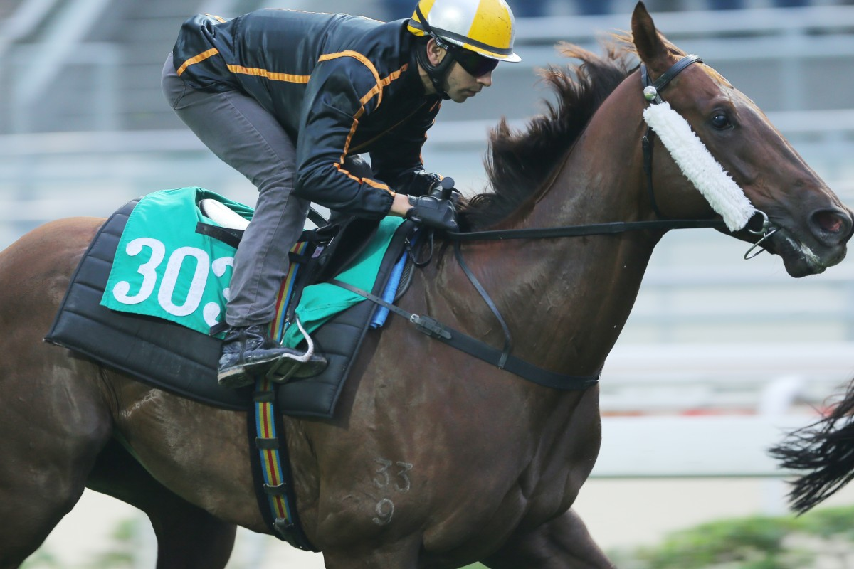 Able Friend has toyed with rivals in his past three starts and the five-year-old is marked as the highest rated horse in the Jockey Club's history. Photos: Kenneth Chan