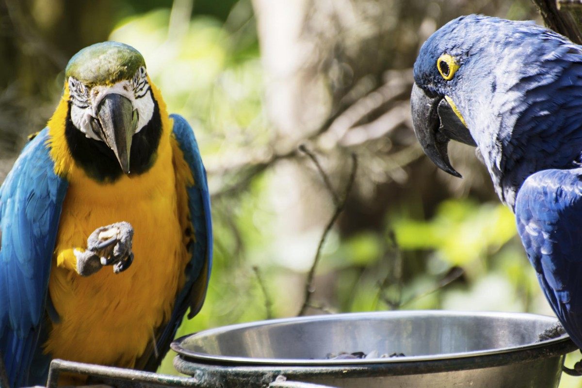 Parrots should be fed a diet of pellets and organic seeds. Photos: Thinkstock