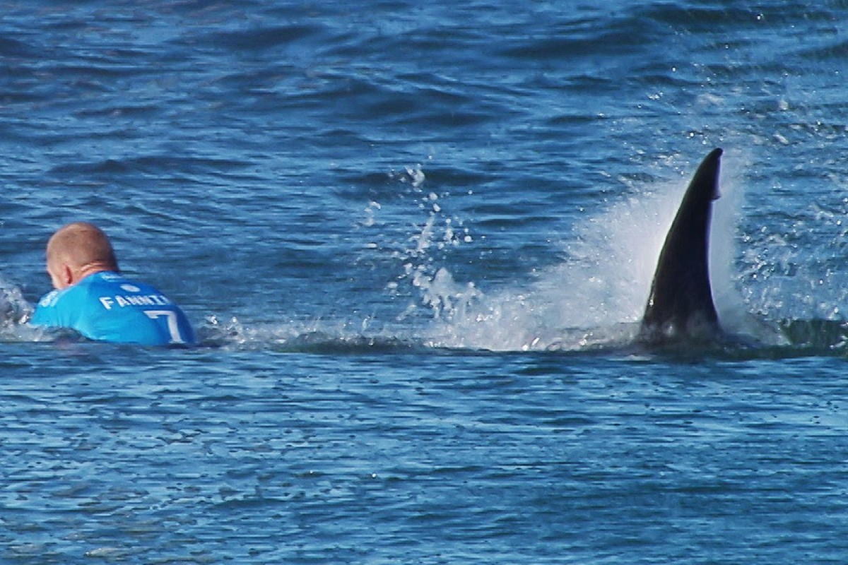 Mick Fanning may not want to watch When Sharks Attack after his recent encounter with one off South Africa. Photo: AFP/WSL
