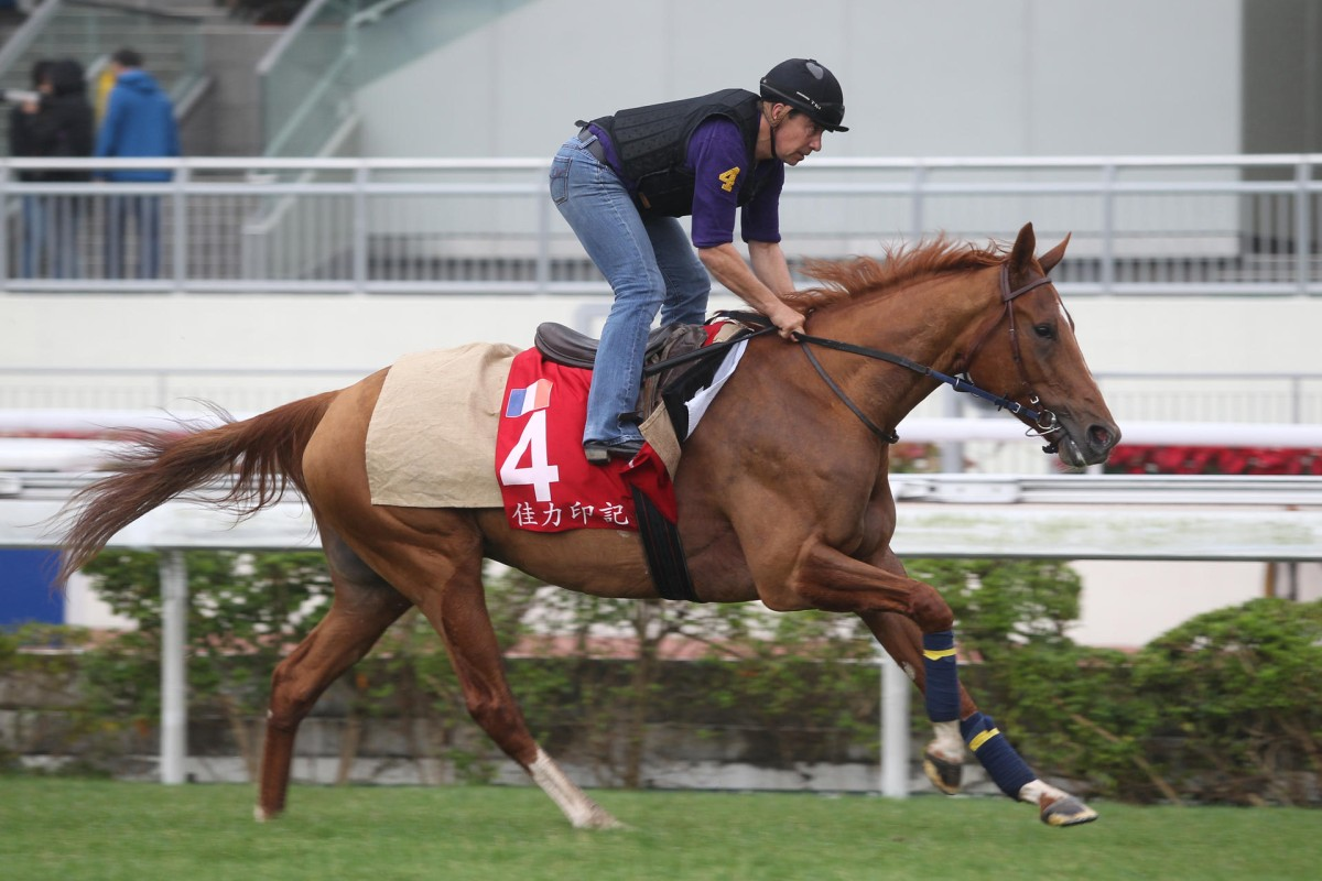 Gailo Chop's trackwork has been exemplary as he flies the French flag in the Hong Kong Cup. Photos: Kenneth Chan