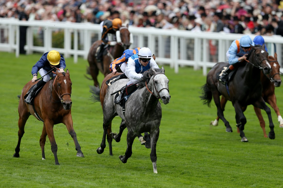 Solow would have faced Able Friend again - as well as Hong Kong Mile winner Maurice - in a race for the ages in Dubai in March. However, that has been shelved with Able Friend sidelined through injury. Photo: Reuters