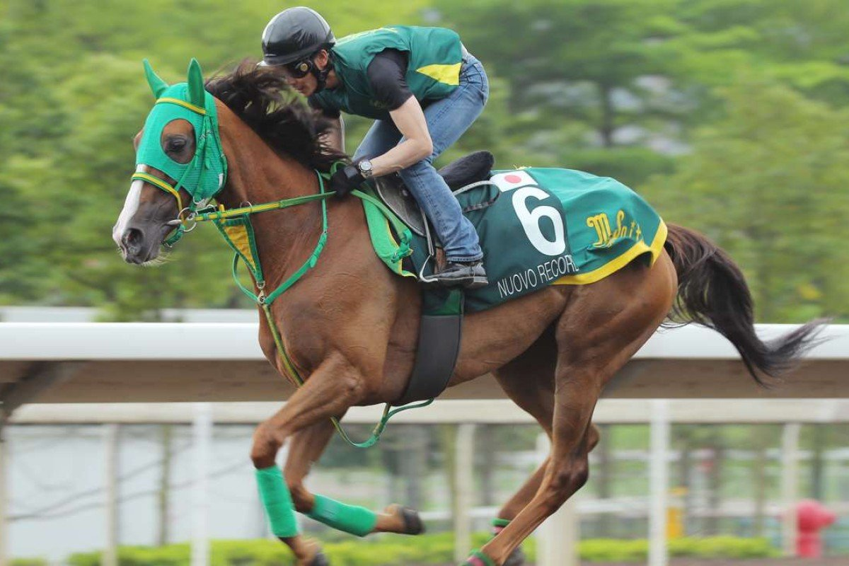QE II Cup runner Nuovo Record gallops on the all weather track at Sha Tin. Photos: Kenneth Chan