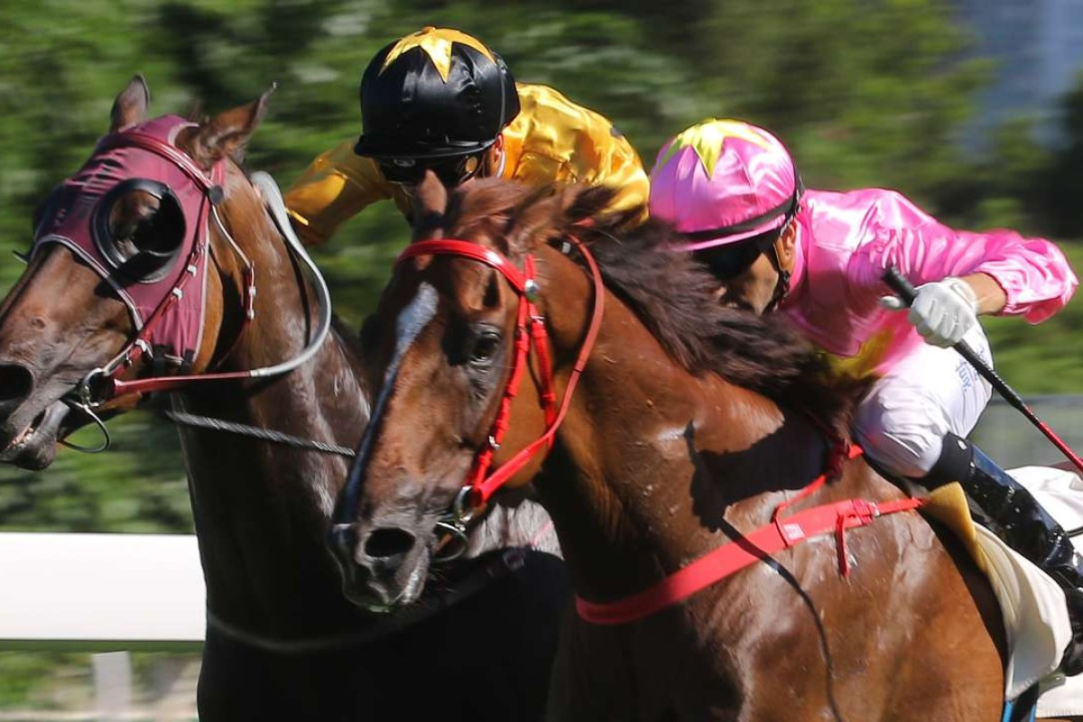 Dashing Fellow is just outgunned by Sun Jewellery in the Group Three Premier Cup last start. Photo: Kenneth Chan