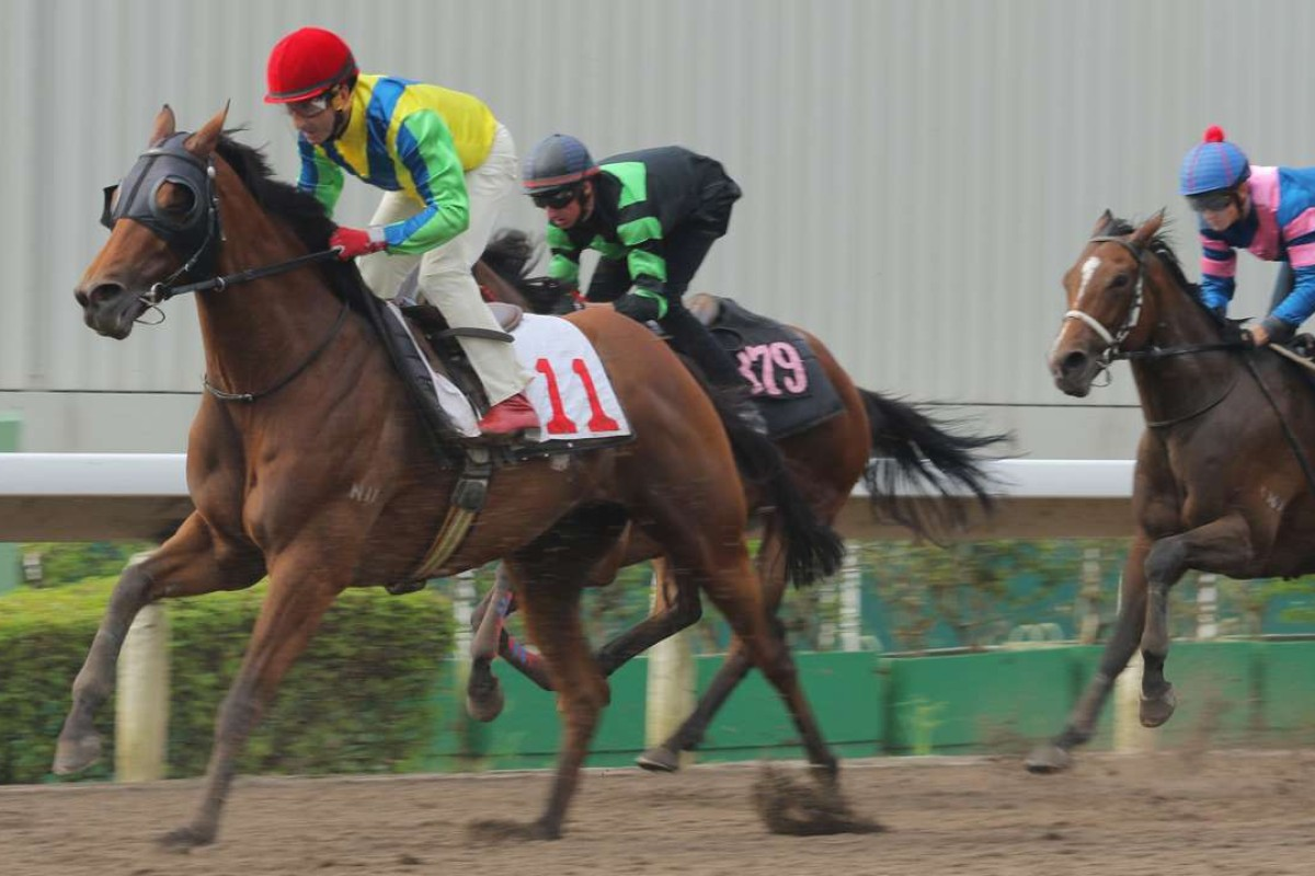 Rich Tapestry drops out during his trial at Sha Tin on Tuesday morning. Photo: Kenneth Chan